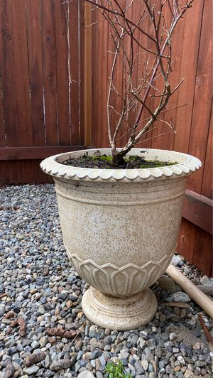 Large planter for Sale in Arlington, WA