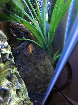 Fully stocked community hexagon 24 gallon aquarium for Sale in Leesburg, VA