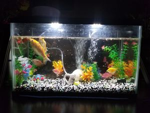 Fish Tank free for Sale in Yucaipa, CA