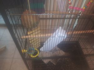 """Bird cage 4ft 5"""" for Sale in Tampa, FL"""