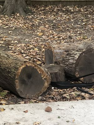 Firewood Free for Sale in Newport News, VA