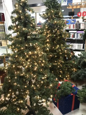 Christmas Trees and other Christmas-y Thangs! for Sale in CO, US