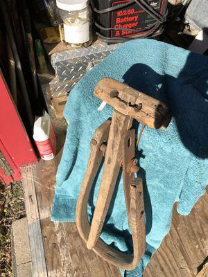 Amish calf weener for Sale in Pasadena, TX