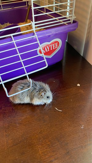 2 juvenile dwarf hamsters and cage for Sale in Orange, CA