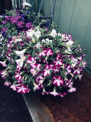 Flowers for Sale in Gresham, OR