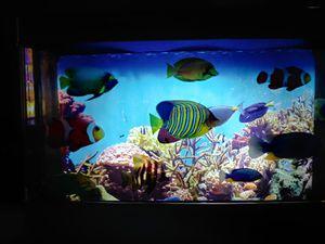 Electronic Fish Aquarium Decor for Sale in Dublin, GA