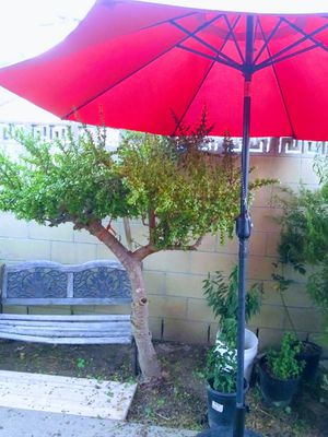 Must pick up free cups when purchasing tree for Sale in Los Angeles, CA