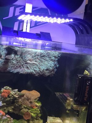 JBJ LED fish tank light for Sale in New York, NY