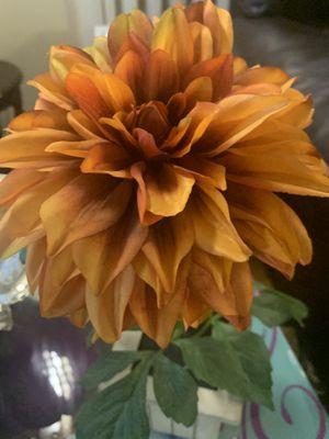 New flowers 🌸 for Sale in Ypsilanti, MI