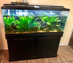 55 gallon long great shape with stand and everything you see in the pictures for Sale in Palm Bay, FL