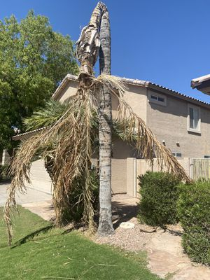 All Type Tree trim/remove for Sale in Laveen Village, AZ