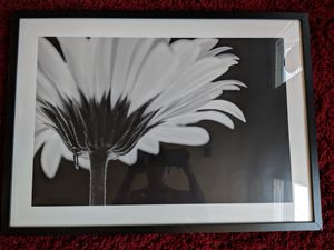 Ikea Picture Frame for Sale in Denver, CO