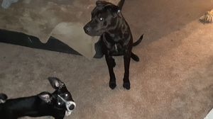 Brodie needs a new home for Sale in Houston, TX