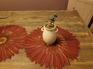 Succulent for Sale in Lockbourne, OH