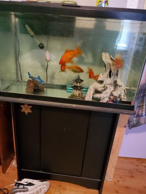 Aquarium for freshwater fish for Sale in Fayetteville, NC