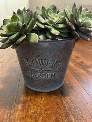 Garden bucket with fake succulent for Sale in San Dimas, CA