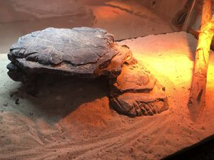 Large reptile tank with climbing stick, water bowl, and shade rock. Also includes infrared and UV light, and new bag of sand. for Sale in Alta Loma, CA