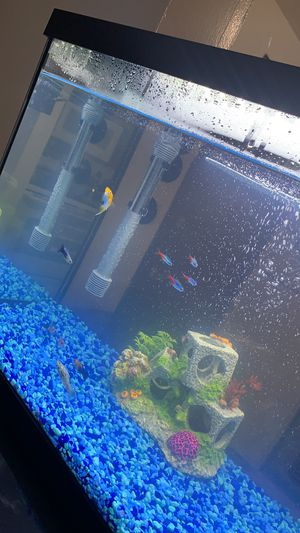 Fish tank 20 Gallon for Sale in Woburn, MA