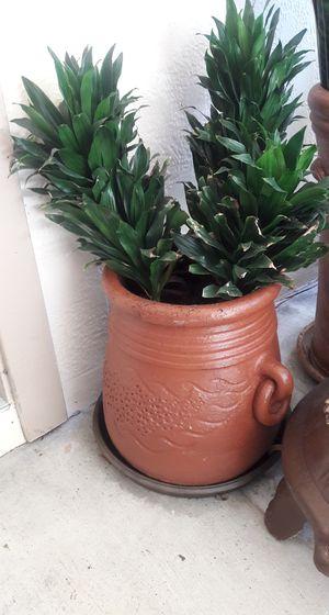 TERRA COTTA POT & PLANT for Sale in Tampa, FL