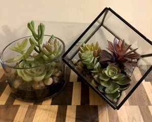 Decorative faux succulent plants for Sale in Los Angeles, CA