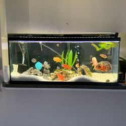 Fish Tank Plus Canister filter 55g for Sale in Fort Lauderdale,  FL