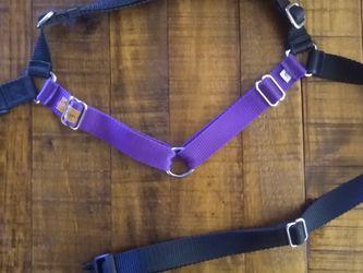 XL Wonder Walker Dog Harness (Purple & Black) for Sale in Lynnwood,  WA