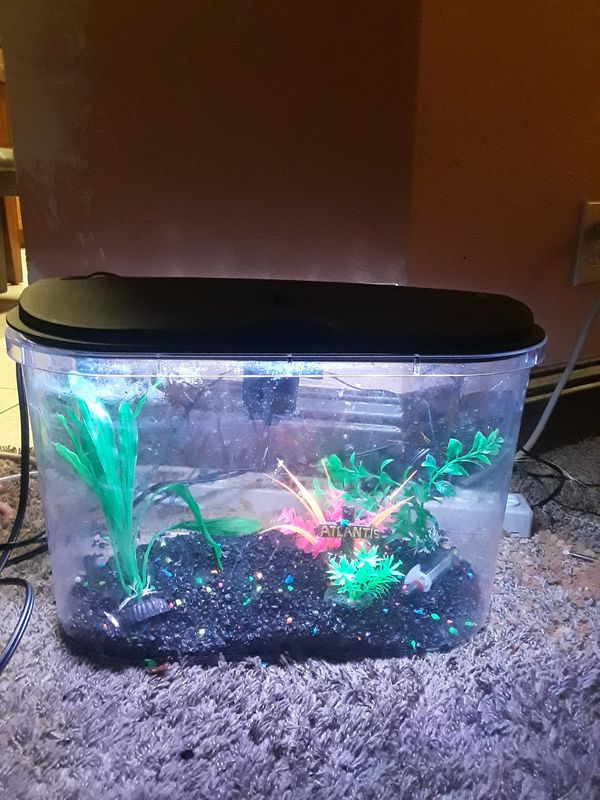 Fish tank and accessory