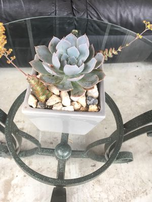 Small centerpiece with succulent Rose for Sale in Fontana, CA