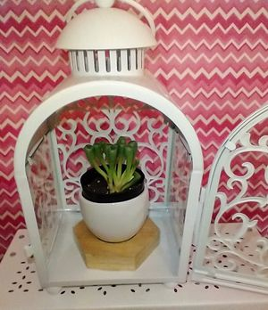 Lantern display with Baby Toes Succulent for Sale in McDonough, GA