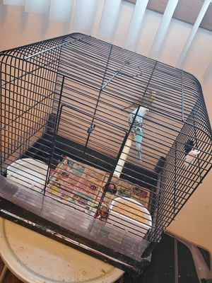 2 budgies with case and food for Sale in Lincoln, NE