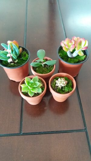 beautiful succulents 5 for $10 for Sale in Rancho Cucamonga, CA