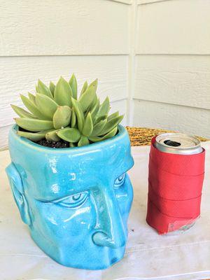Echeveria Miranda Succulent Plants in Head Ceramic Planter-Real Indoor House Plant for Sale in Auburn, WA