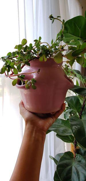 Orchid ceramic pot for Sale in San Antonio, TX