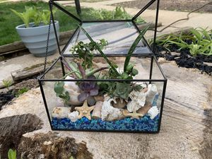 """Life's a Beach"" Live Succulent Terrarium for Sale in Columbia, MD"