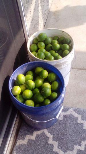 Lemons for Sale in Merced, CA