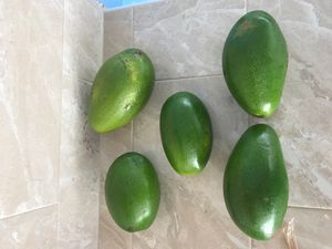 Aguacates for Sale in Tampa, FL