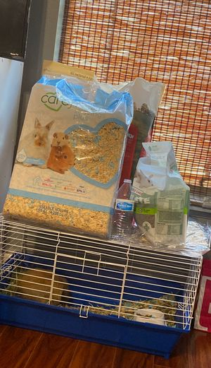 Holland lop bunny for sale for Sale in Orlando, FL