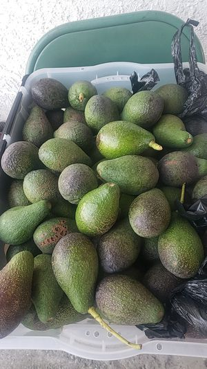 Aguacates for Sale in Ontario, CA