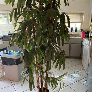 Fake Plant for Sale in Chino Hills, CA