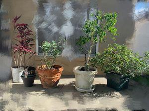 Free plants/garden flowers and pots for Sale in Alafaya, FL