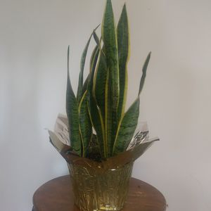 Air Purifying Plants for Sale in Los Angeles, CA