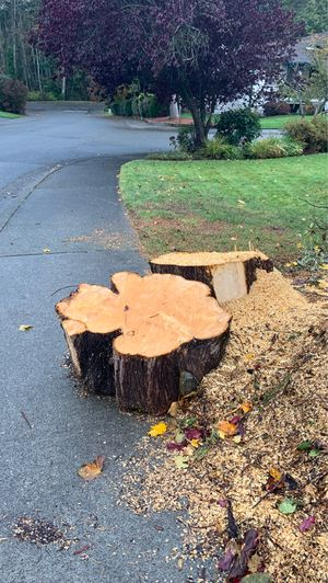 Free woods for Sale in Federal Way, WA