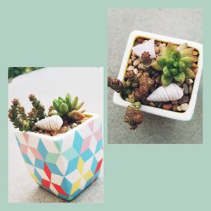 Succulent arrangement in colorful pot for Sale in Rowland Heights, CA