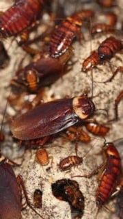 DONT LET YOUR WHOLE HOUSE GET INFESTED CONTACT US NOW for Sale in Gaithersburg, MD