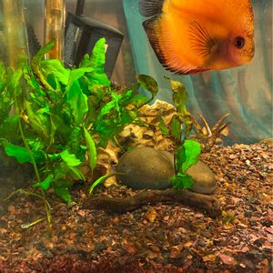 Fish Tank for Sale in San Francisco, CA