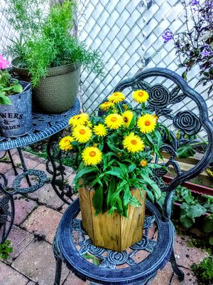 Wood Pot of Yellow Flowers for Sale in Poinciana, FL
