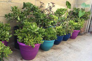 3$ plantas / plants / mix plants for Sale in Compton, CA