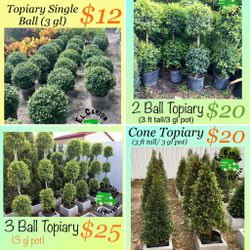 Home Plants- SPECIAL PRICE TOPIARIES for Sale in Miami,  FL