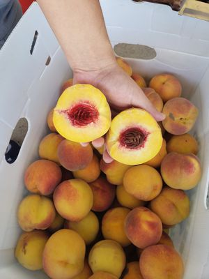 Sweet yellow peaches for Sale in Galt, CA