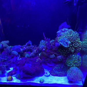 Saltwater Corals for Sale in La Puente, CA